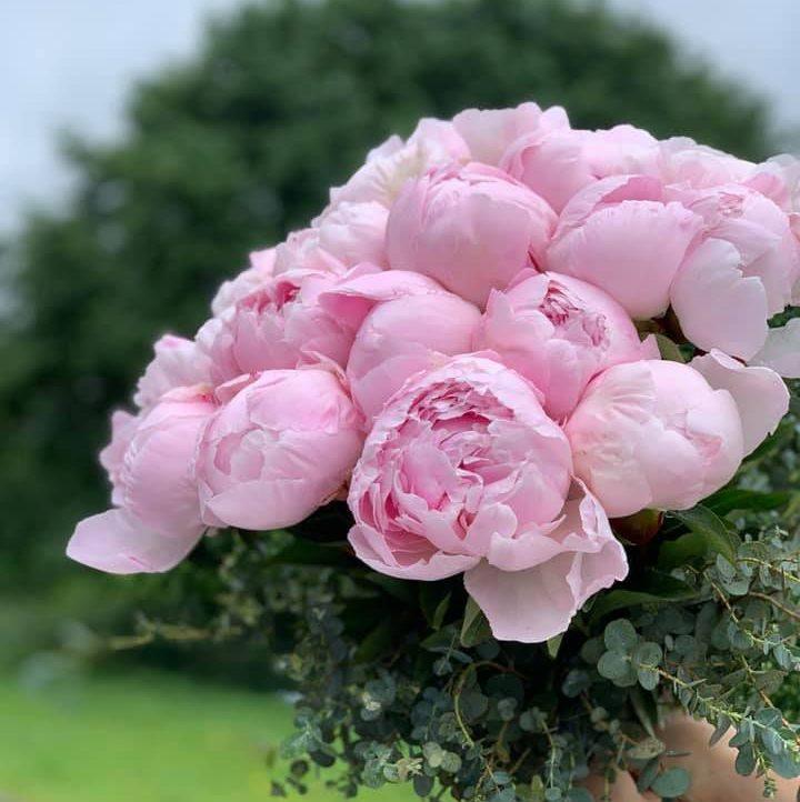 kytica z pivoniek Bouquet